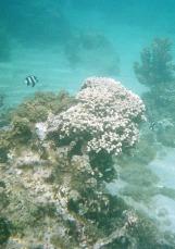 Snorkeling off Tahiti