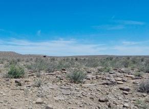An ostrich running through the Great Karoo