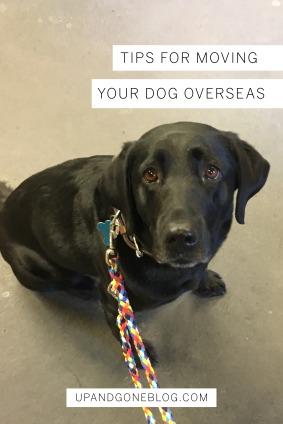 Dog OVersea