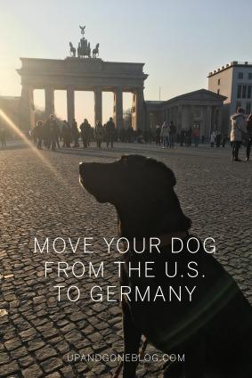 Dog OVersea2